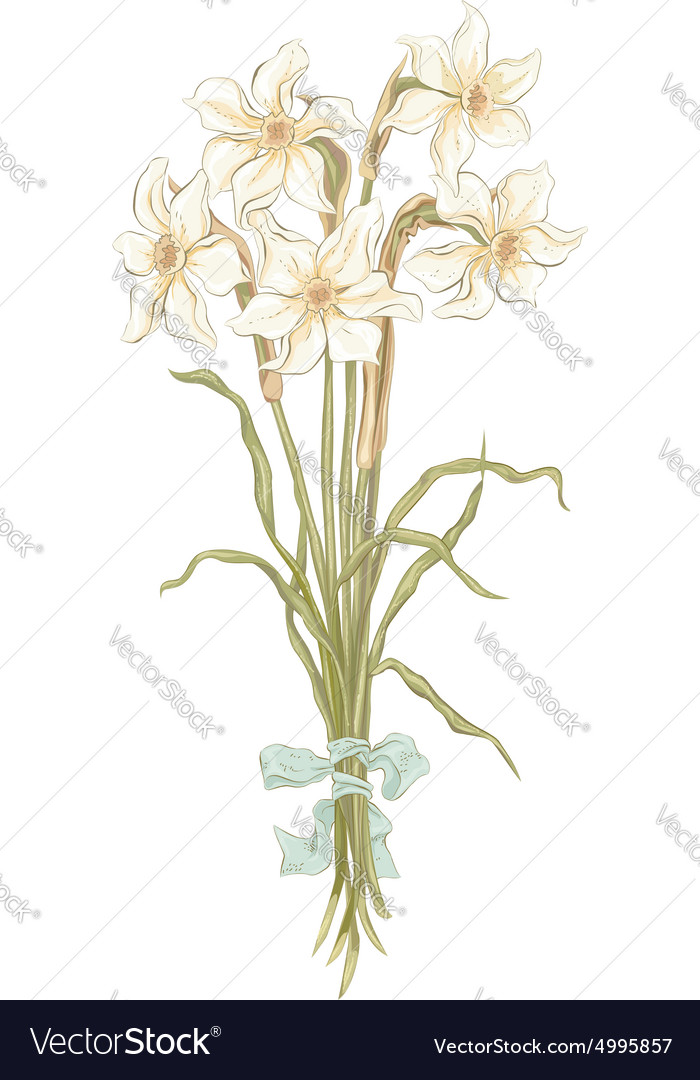 Bunch of daffodils vector