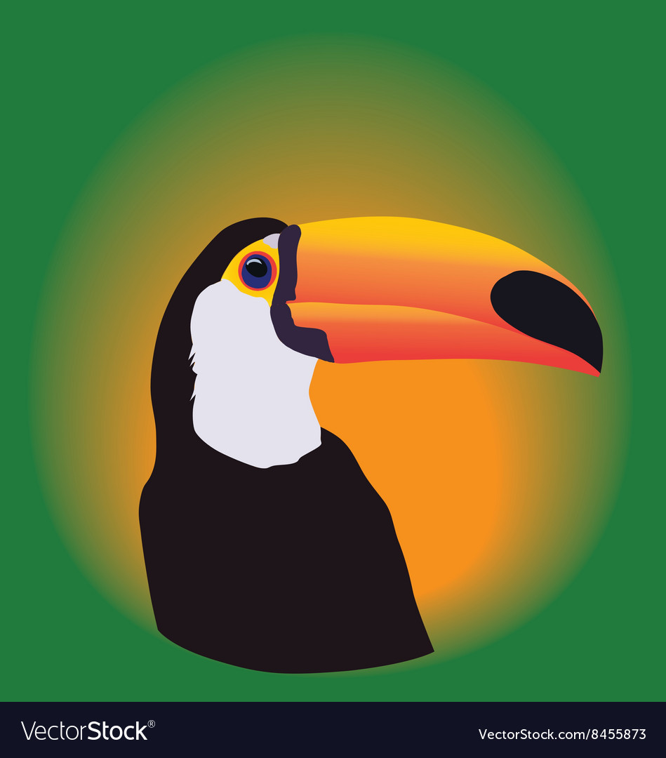 Head of a toucan on a green background vector