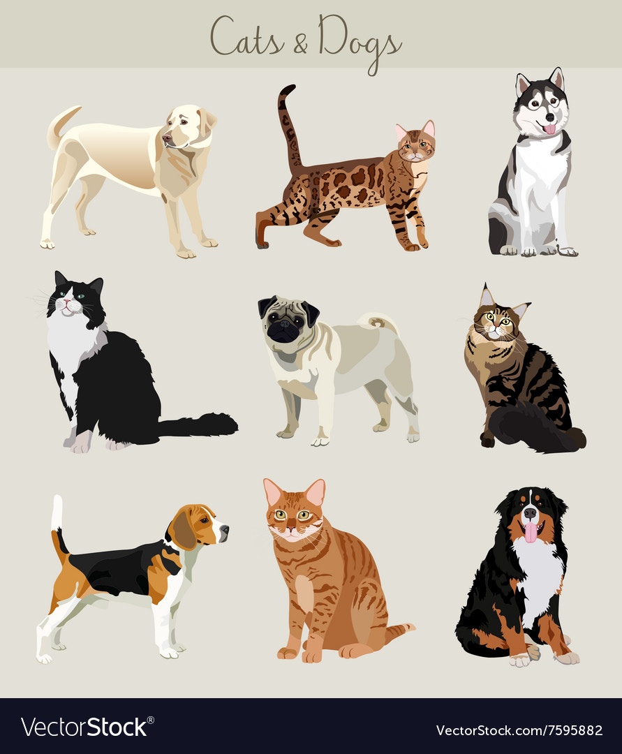 Dogs and cats set different types vector