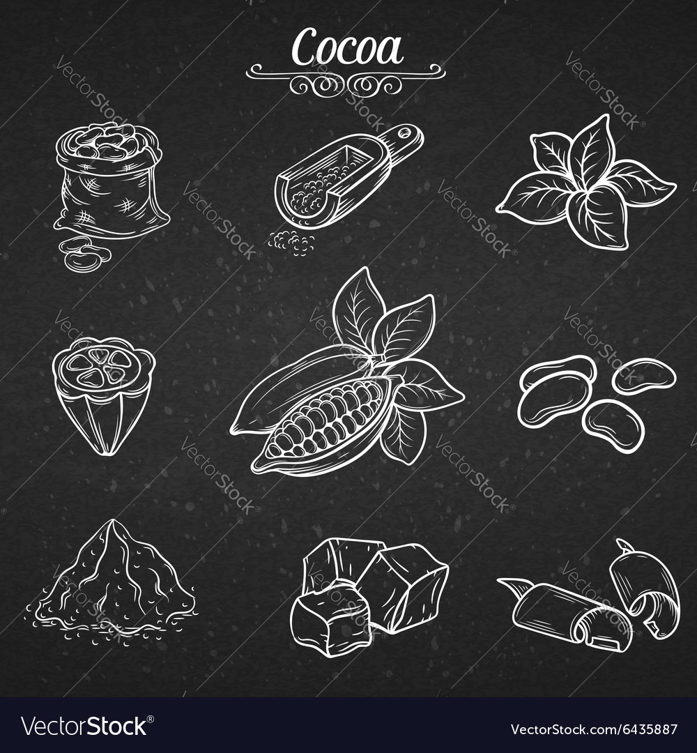 Set hand draw decorative cocoa chocolate vector