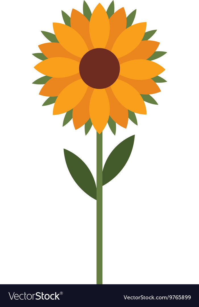 Beautiful sunflower isolated icon design vector