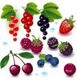 collection berries vector image vector image