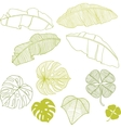Set of different leaves A vector image vector image