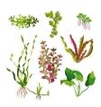 Aquarium plants set Cartoon underwater algae vector image