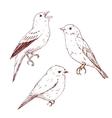 Nice hand drawn birds vector image
