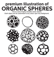 Organic Spheres vector image vector image