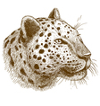 engraving leopard head vector image