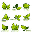 Glossy leaves and plants empblems icons and vector image