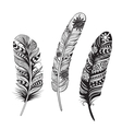 Feathers of birds vector image
