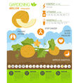 Gardening work farming infographic Melon Graphic vector image