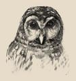 owl sketch drawn hands vector image