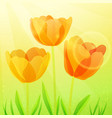 three bright tulips vector image