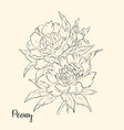 hand draw of flower vector image