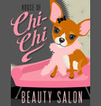 chihuahua dog in beauty salon vector image