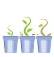 set of flower pots Shoots and death of plants vector image