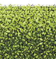 Green Tree Wall on isolated vector image