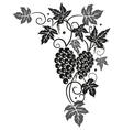 Vine grapes border vector image