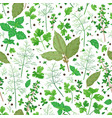 pattern with flavoring herbs vector image