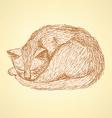 Sketch sleeping cat t in vintage style vector image