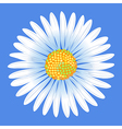 Chamomile flower vector image