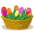 basket with flowers tulips vector image