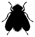 ordinary fly vector image