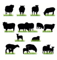 16 sheeps silhouettes set vector image