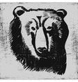 bear head hand drawn sketch grunge texture vector image