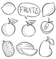 doodle various fruit collection stock vector image