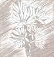 daisies sketch vector image