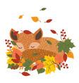 stylized fox sleeping in fallen leaves a vector image