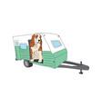 english cocker spaniel dog breed vector image