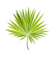 Fan shaped leaf of palmetto tree vector image vector image
