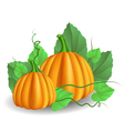 Pumpkins with leaves vector image vector image