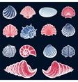 Colorful sea shell set vector image vector image