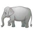 Asian elephant vector image