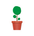 Plant tree in flower pot decoration home plant vector image