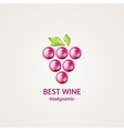 Colored glossy and shiny winery sphere icon vector image vector image