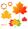 Maple vector image