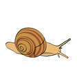 snail - isolated vector image