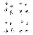 footprints of lizard vector image