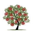Rowan tree with berries for your design vector image