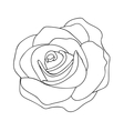 rose line drawing image vector image
