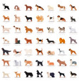 big set of flat dogicons vector image