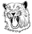 Big Cat Head vector image