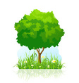 isolated green tree background vector image vector image