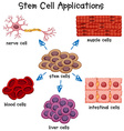 Poster showing different stem cell applications vector image