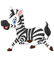 Happy baby zebra running vector image