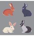 cartoon rabbits different vector image