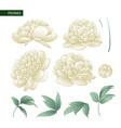 Set of peony flowers elements vector image